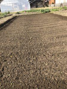 ジャガイモ(耕運、うね立て、元肥表面施肥 [2020-04-04] (1)