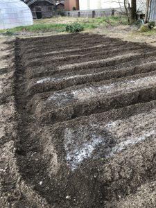 ジャガイモ(耕運、うね立て、元肥表面施肥 [2020-04-04] (2)