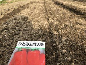 ニンジン(ひとみ五寸)(種まき) [2020-05-03]