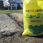 [2021-03-06] タマネギ(ヒューライム施肥) (38)re